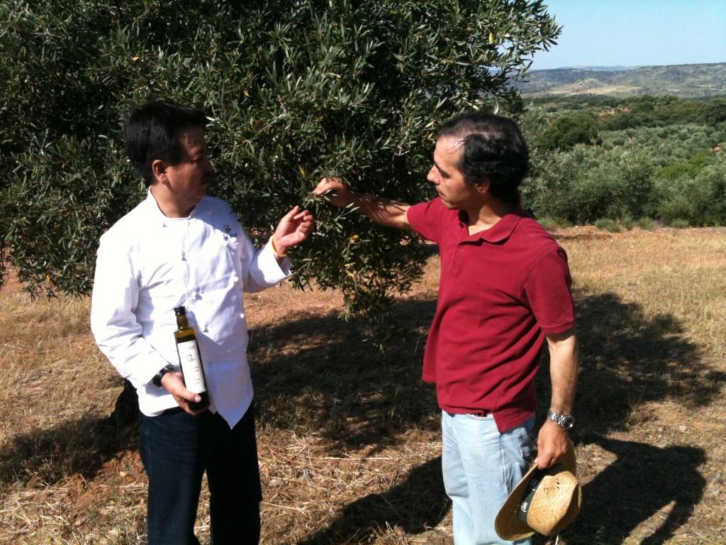 visitas olivar ecológico