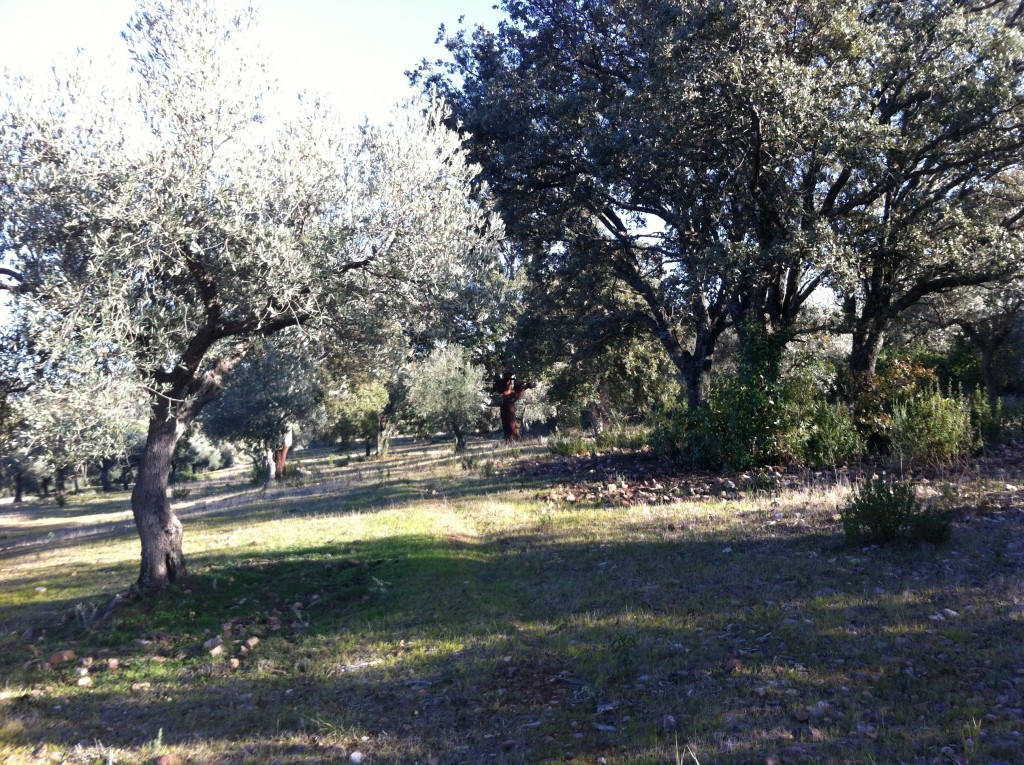 olivar ecológicos