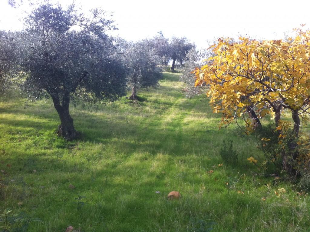 olivar ecológico ecolibor