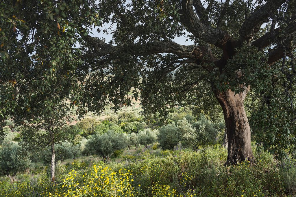 Olivos Ecolibor
